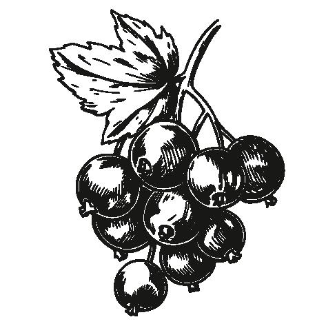 Black Currants